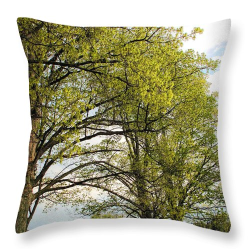 Spring Throw Pillow featuring the photograph Spring Awaits by Joan Minchak