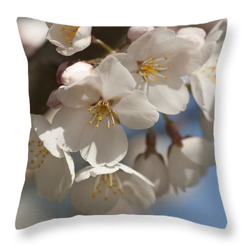 Prunus Yedoensis Throw Pillow featuring the photograph Spring Blooming Yoshino Cherry Tree by Kathy Clark