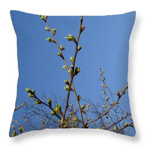 Buds Throw Pillow featuring the photograph Spring Buds by John Chatterley
