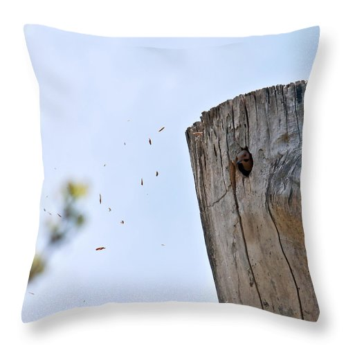 Yellow Shafted Northern Flicker Throw Pillow featuring the photograph Spring Cleaning by Edward Peterson