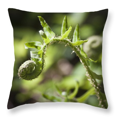 Spring Throw Pillow featuring the photograph Spring Fern by Teresa Mucha