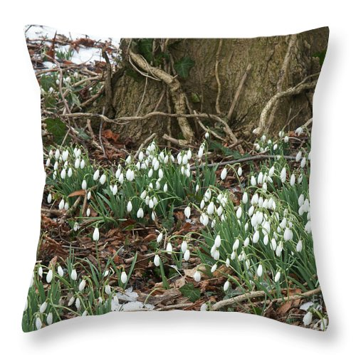 Spring Throw Pillow featuring the photograph Spring In The Air by David Birchall
