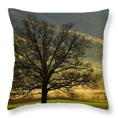 Morning Throw Pillow featuring the photograph Spring Morning In Cades Cove - D003803a by Daniel Dempster
