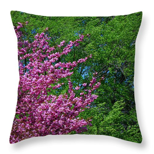 Seasons Throw Pillow featuring the photograph Springtime by Lisa Phillips