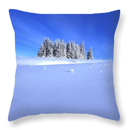 Snow Throw Pillow featuring the photograph Spruce Grove In Winter by Michele Cornelius