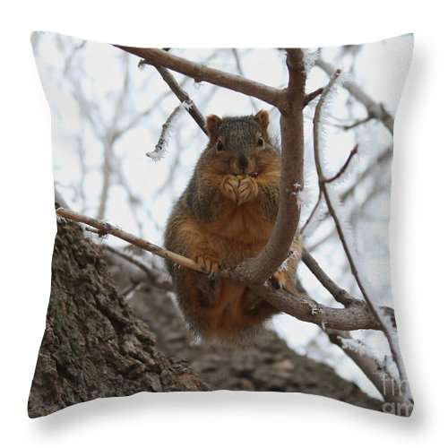 Squirrel Throw Pillow featuring the photograph Squirrel Eating In The Frost by Lori Tordsen