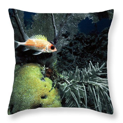 Squirrel Fish Throw Pillow featuring the photograph Squirrel Fish by Mike Nellums