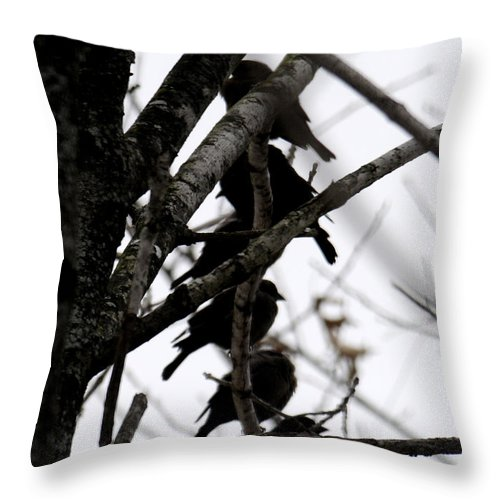 Black Birds Throw Pillow featuring the photograph Stacked by Wanda Brandon