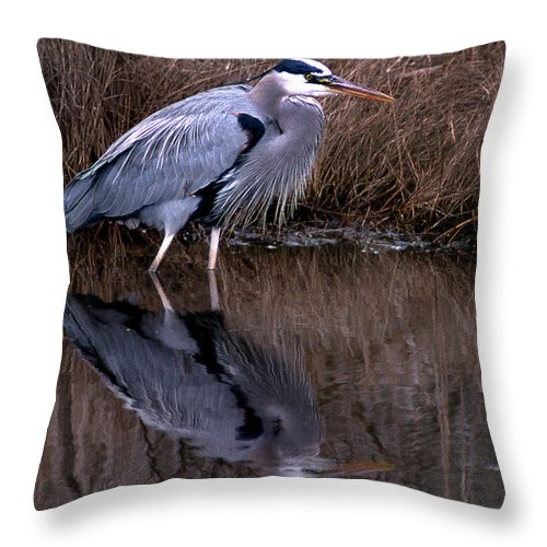 Blue Heron Throw Pillow featuring the photograph Stalker by Skip Willits