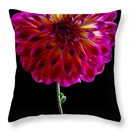 Dahlia Throw Pillow featuring the photograph Stand Up Dahlia by Jean Noren