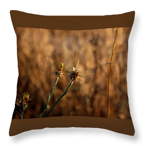 Close-up Throw Pillow featuring the photograph Star Thistle by Leonard Sharp