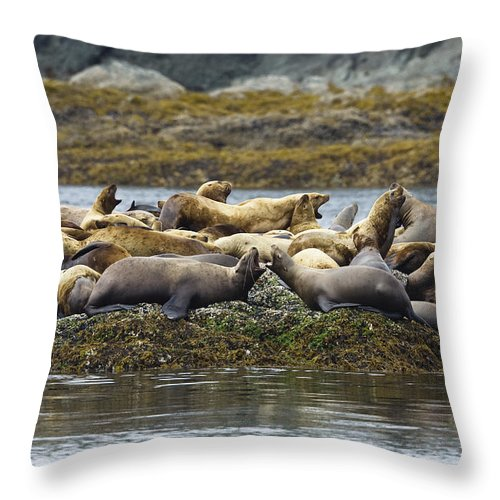 Mp Throw Pillow featuring the photograph Stellers Sea Lion Eumetopias Jubatus by Konrad Wothe