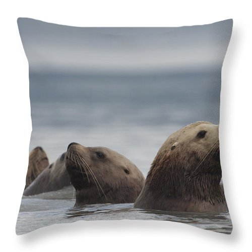 Mp Throw Pillow featuring the photograph Stellers Sea Lion Eumetopias Jubatus by Michael Quinton