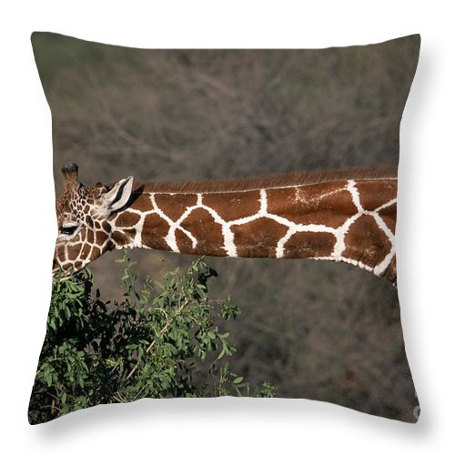 Bronstein Throw Pillow featuring the photograph Sticking Your Neck Out by Sandra Bronstein
