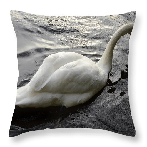 Swan Throw Pillow featuring the photograph Still Waters Run Deep by Bob Christopher