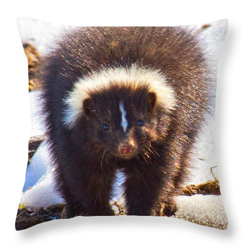 Skunk Throw Pillow featuring the photograph Stop Where You Are by Betsy Knapp