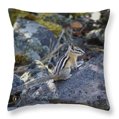 Chipmunks Throw Pillow featuring the photograph Straight Tailed Chipmunk On A Rock by Ben Upham III