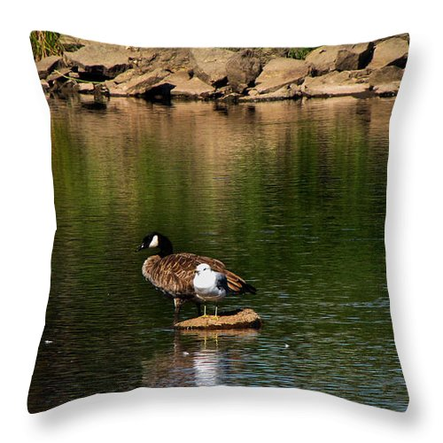 Landscape Photograph Throw Pillow featuring the photograph Stranded by Ms Judi
