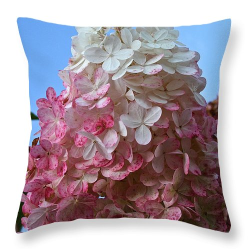 Outdoors Throw Pillow featuring the photograph Strawberry Vanilla Hydrangea by Susan Herber