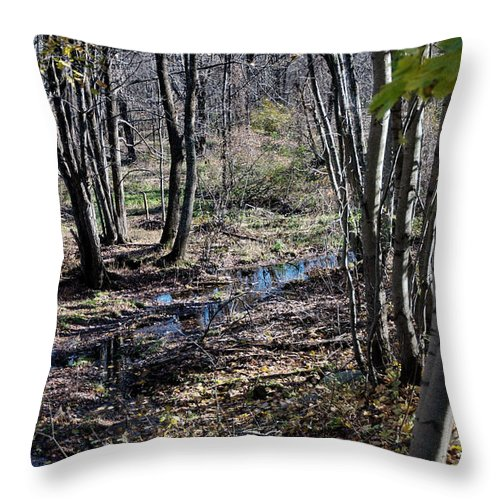 New England Throw Pillow featuring the photograph Stream In The Woods by Barry Doherty