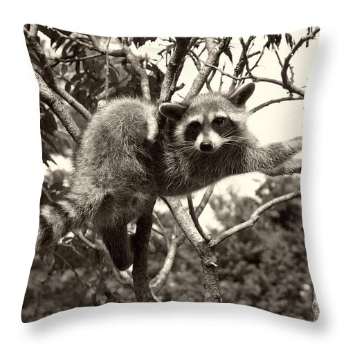 Racoon Throw Pillow featuring the photograph Stretch by Nina Fosdick