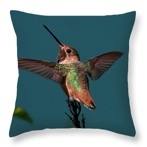 Hummingbird Prints Throw Pillow featuring the photograph Stretch by Paul Marto