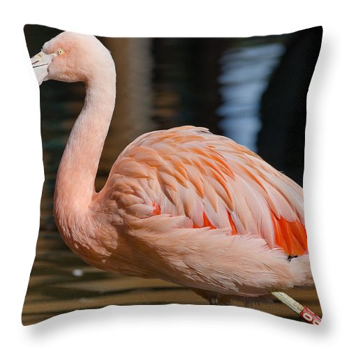 Flamingo Throw Pillow featuring the photograph Strolling Flamingo by Greg Nyquist