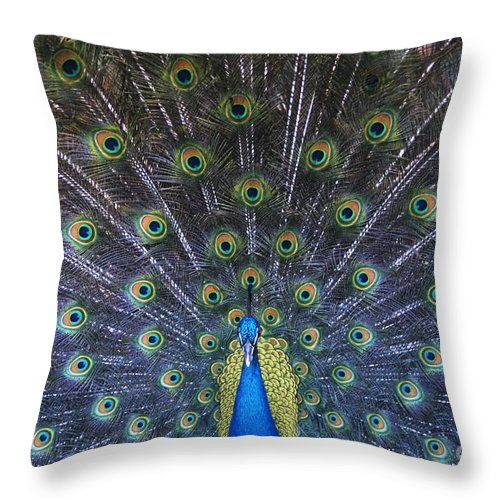Birds Throw Pillow featuring the photograph Showoff by Sandra Bronstein