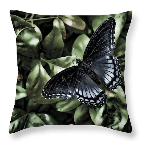 Butterfly Throw Pillow featuring the photograph Subdued Butterfly by Sheri Bartoszek
