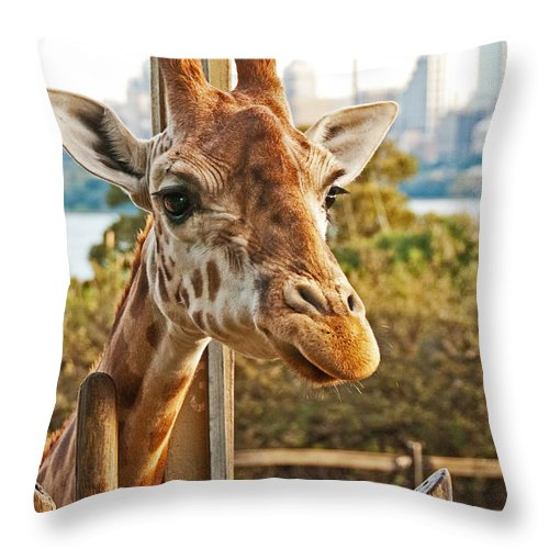 Photograph Throw Pillow featuring the photograph Such Pretty Eyes by Bob and Nancy Kendrick