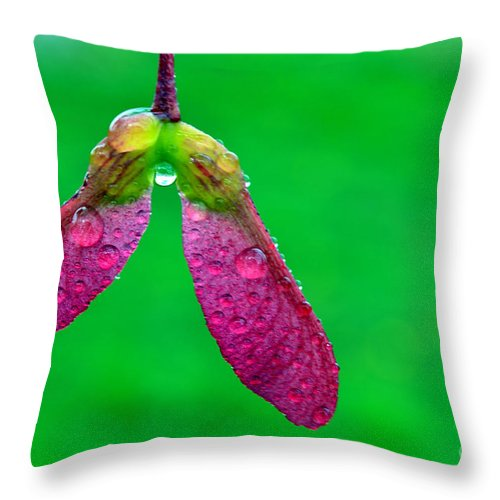 Sugar Maple Throw Pillow featuring the photograph Sugar Maple Seeds And Raindrops by Thomas R Fletcher