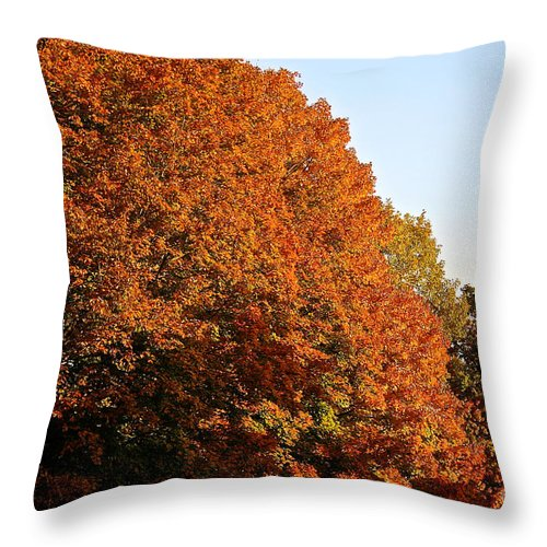 Outdoors Throw Pillow featuring the photograph Sugar Maple by Susan Herber