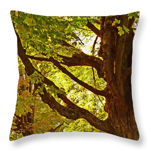 Maple Throw Pillow featuring the photograph Sugarbush by William Fields