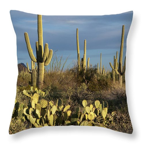 Bronstein Throw Pillow featuring the photograph Suguaros At Sunset by Sandra Bronstein