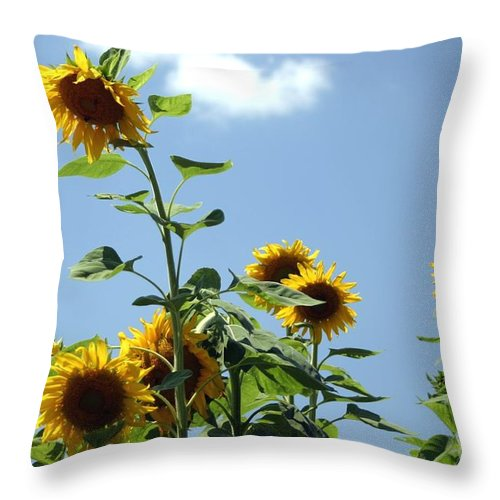 Flowers Throw Pillow featuring the photograph Summer Days by Living Color Photography Lorraine Lynch
