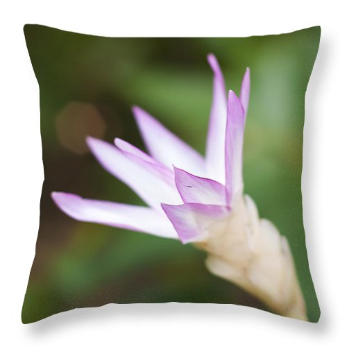 Art Throw Pillow featuring the photograph Summer Lily by Ivy Ho