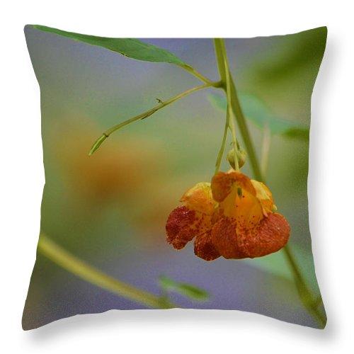 Flower  Throw Pillow featuring the photograph Summers End by Ann Bridges