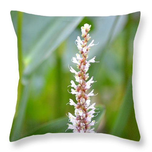 Summer Throw Pillow featuring the photograph Summer's End Bloom by Maria Urso