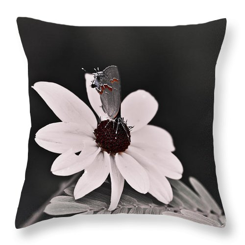 Butterfly Throw Pillow featuring the photograph Summers Memory by Kim Henderson