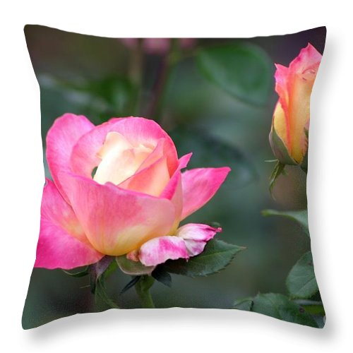 Roses Throw Pillow featuring the photograph Summertime Sweetness by Living Color Photography Lorraine Lynch