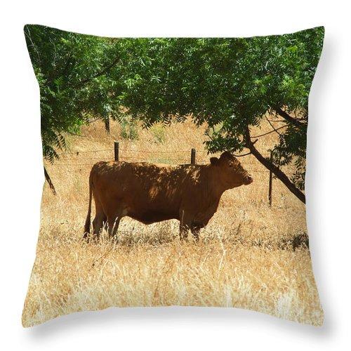 Artoffoxvox Throw Pillow featuring the photograph Sun Dappled Cow by Kristen Fox