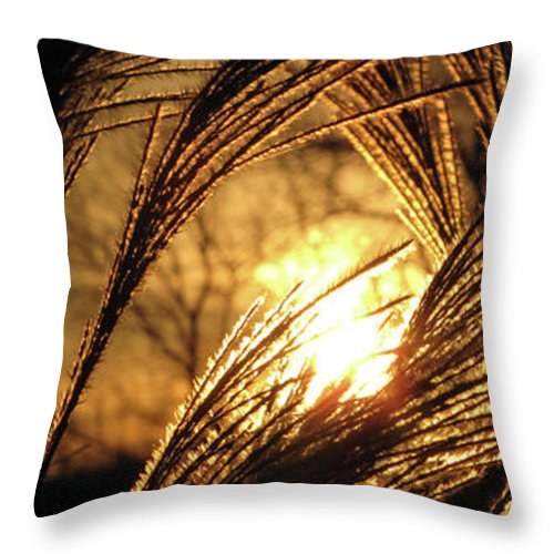 Sunset Throw Pillow featuring the photograph Sun In Grass Panoramic by Amy Tyler