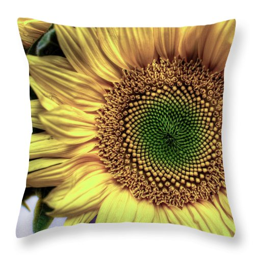 Throw Pillow featuring the photograph Sunflower 28 by Natasha Bishop