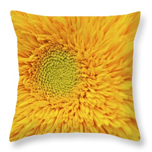 Sunflower Throw Pillow featuring the photograph Sunflower 2881 by Michael Peychich