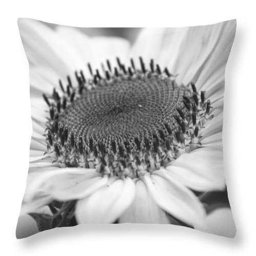 Colorful Throw Pillow featuring the photograph Sunflower Bloom Black And White by James BO Insogna