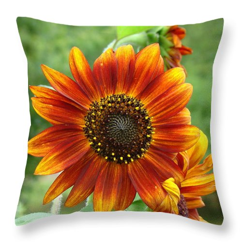 Red Sunflower Throw Pillow featuring the photograph Sunflower by Lisa Rose Musselwhite