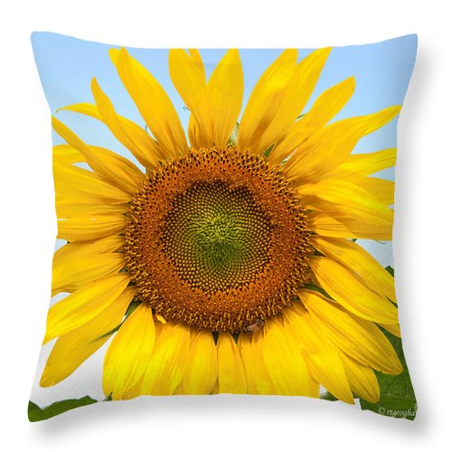 Sunflower Throw Pillow featuring the photograph Sunflower On Blue by Regina Geoghan