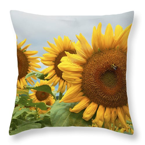 Sunflowers Throw Pillow featuring the photograph Sunflower Season by Regina Geoghan