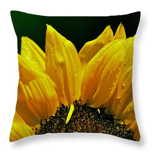 Flower Throw Pillow featuring the photograph Sunflower With Drops by Mary Anne Williams