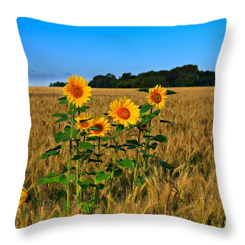 Sunflowers Throw Pillow featuring the photograph Sunflowers by Louise Heusinkveld